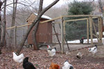 toolshed chicken coop
