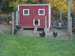 Square Chicken House